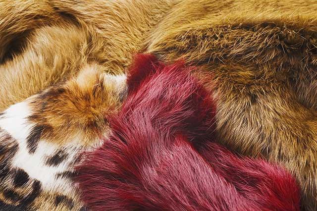 動物の毛皮